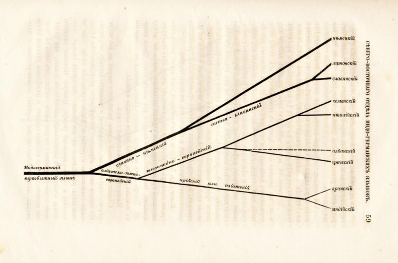 Augusto Šleicherio sukurtas genealoginis kalbų medis